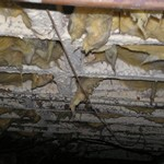Mold Feeding on Joints in Crawl Space 2